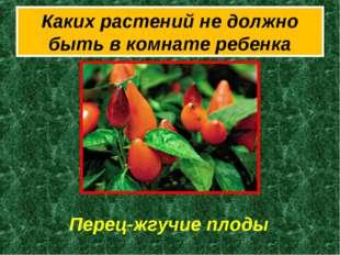 Каких растений не должно быть в комнате ребенка Перец-жгучие плоды