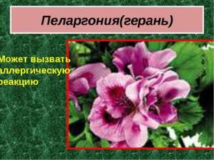 Пеларгония(герань) Может вызвать аллергическую реакцию