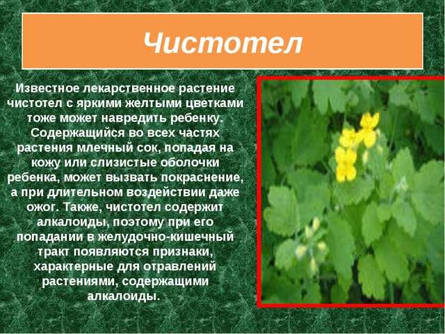 Чистотел Известное лекарственное растение чистотел с яркими желтыми цветками...
