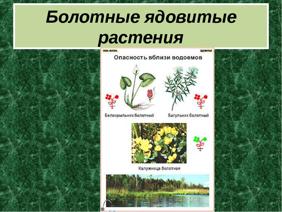 Болотные ядовитые растения