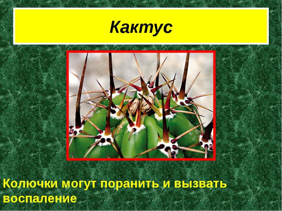 Кактус Колючки могут поранить и вызвать воспаление