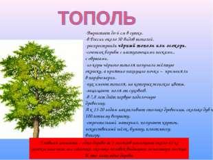 -Вырастает до 6 см в сутки. -в России около 50 видов тополей. -распространён
