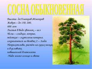 Высота- до35метров-80метров Живут – до 150, 200, 400 лет Листья в виде хвоино