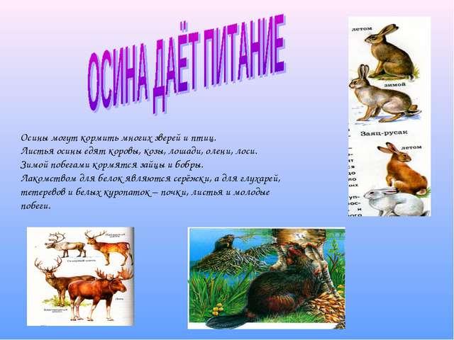 Осины могут кормить многих зверей и птиц. Листья осины едят коровы, козы, ло...