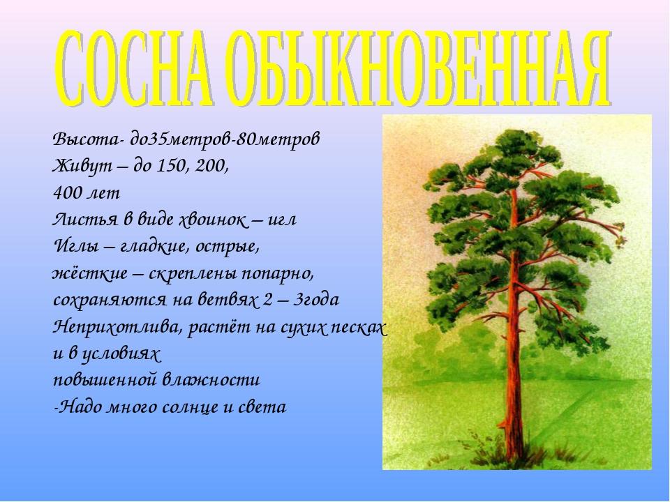 Высота- до35метров-80метров Живут – до 150, 200, 400 лет Листья в виде хвоино...