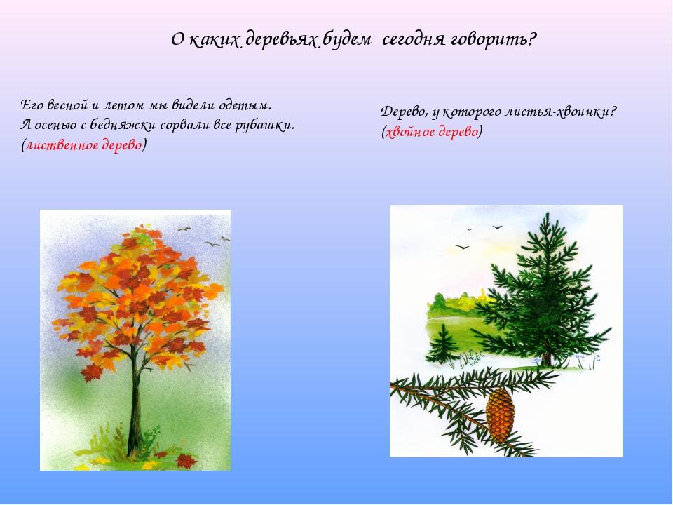 О каких деревьях будем сегодня говорить? Его весной и летом мы видели одетым....