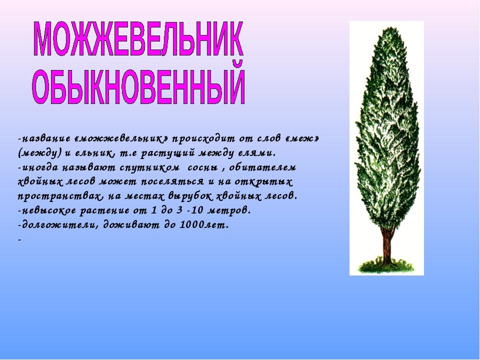 -название «можжевельник» происходит от слов «меж» (между) и ельник, т.е расту...