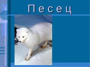 П е с е ц Песец(полярная лисица)-промысловый пушной зверь распространен по вс
