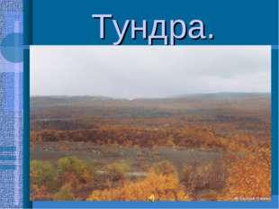 Тундра. Занимает 15% всей территории России. Зима длится6-8месяцев,морозы до
