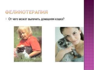 От чего может вылечить домашняя кошка?