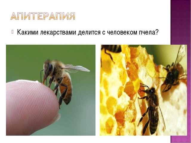 Какими лекарствами делится с человеком пчела?