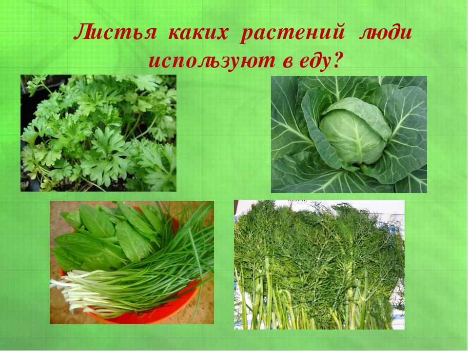 Листья каких растений люди используют в еду?