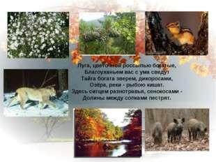 Луга, цветочной россыпью богатые, Благоуханьем вас с ума сведут Тайга богата