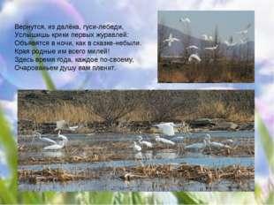 Вернутся, из далёка, гуси-лебеди, Услышишь крики первых журавлей: Объявятся в