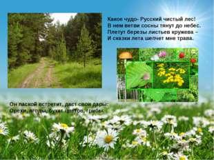 Какое чудо- Русский чистый лес! В нем ветви сосны тянут до небес. Плетут бере
