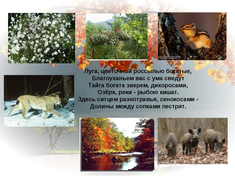 Луга, цветочной россыпью богатые, Благоуханьем вас с ума сведут Тайга богата...
