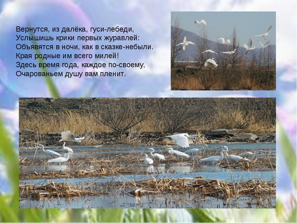 Вернутся, из далёка, гуси-лебеди, Услышишь крики первых журавлей: Объявятся в...