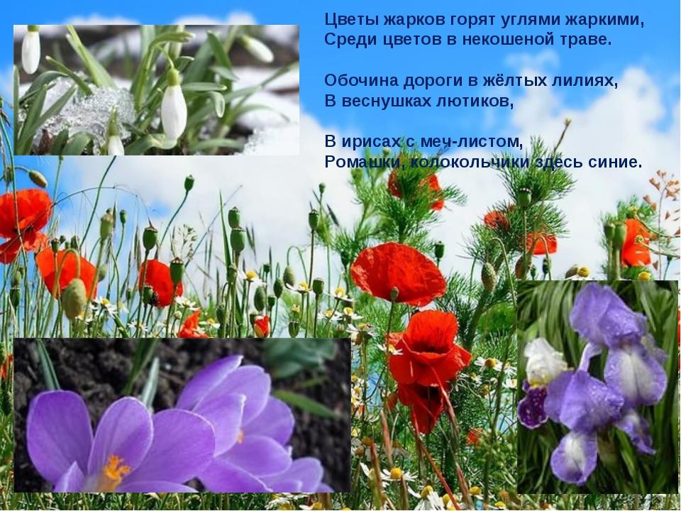Цветы жарков горят углями жаркими, Среди цветов в некошеной траве. Обочина до...