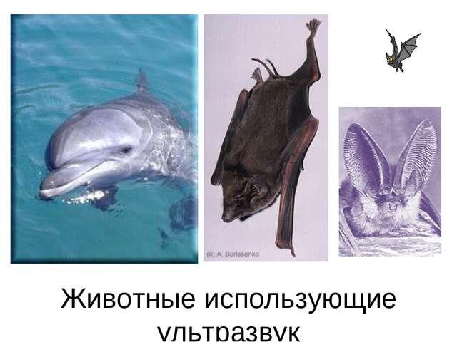 Животные использующие ультразвук