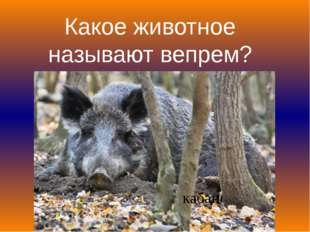 Какое животное называют вепрем? кабан