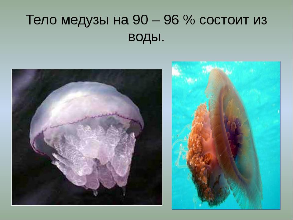 Тело медузы на 90 – 96 % состоит из воды.