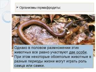 Организмы гермафродиты: Виноградная улитка Устрицы Земляной червь Однако в по