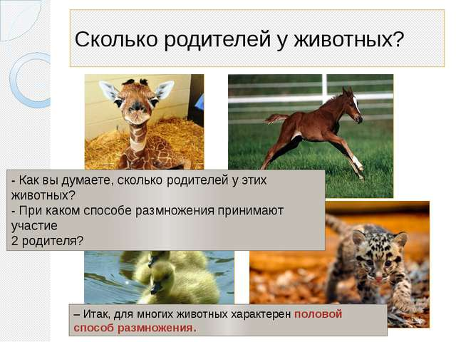 Сколько родителей у животных? - Как вы думаете, сколько родителей у этих живо...
