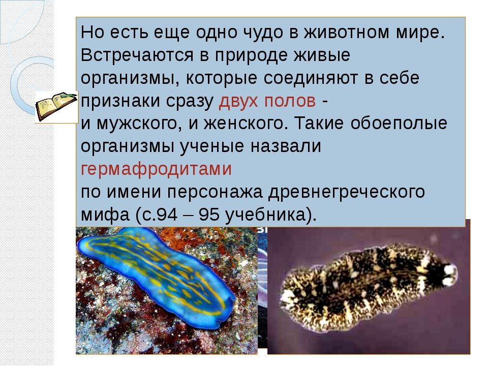 Гермафродиты - это организмы, у которых формируются женские и мужские гаметы....