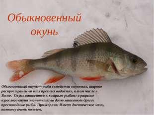 Обыкновенный окунь Обыкновенный окунь— рыба семейства окуневых, широко распро