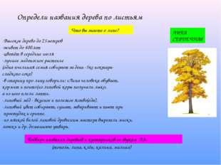 Определи названия дерева по листьям Что вы знаете о липе? -Высокое дерево до