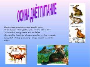 Осины могут кормить многих зверей и птиц. Листья осины едят коровы, козы, ло