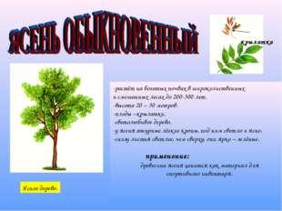 -растёт на богатых почвах в широколиственных и смешанных лесах до 200-300 лет