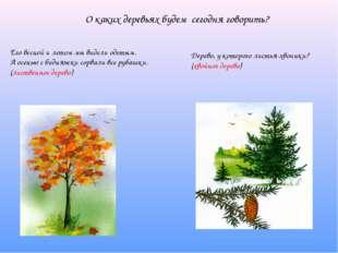 О каких деревьях будем сегодня говорить? Его весной и летом мы видели одетым.