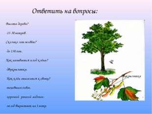Ответить на вопросы: Высота дерева? -15-30метров. Сколько лет живёт? -до 150л