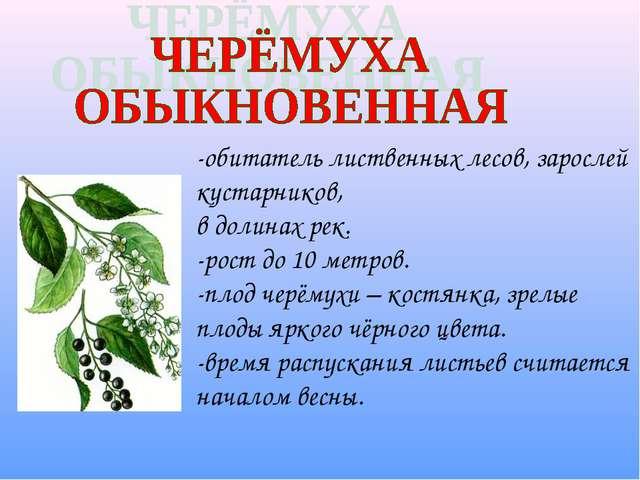 -обитатель лиственных лесов, зарослей кустарников, в долинах рек. -рост до 10...