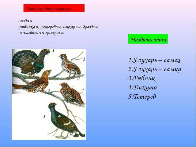 Черёмуха даёт питание: -людям -рябчикам, тетеревам, глухарям, дроздам. -мышев...