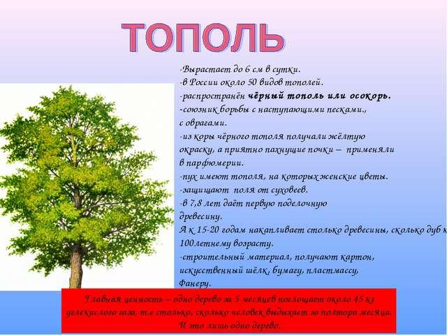 -Вырастает до 6 см в сутки. -в России около 50 видов тополей. -распространён...