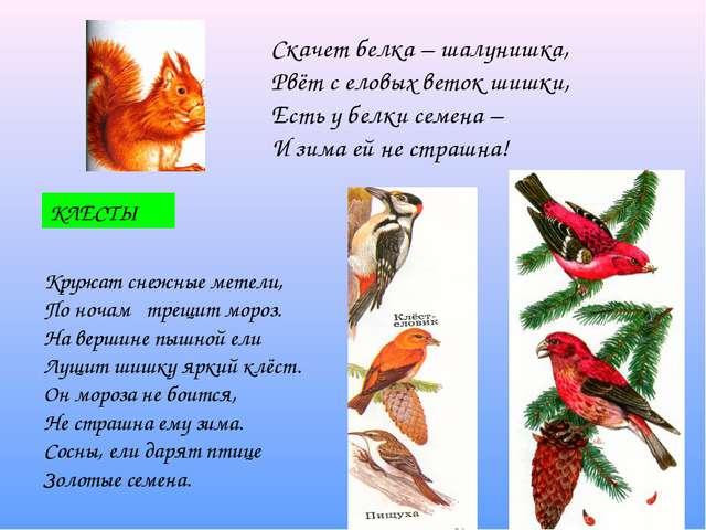 Скачет белка – шалунишка, Рвёт с еловых веток шишки, Есть у белки семена – И...