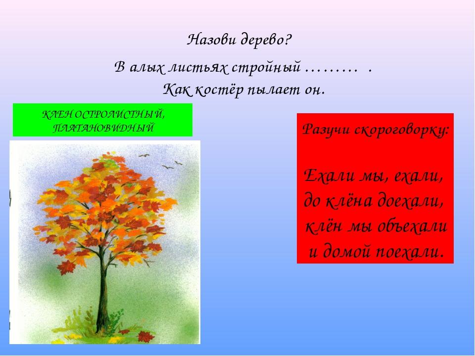 Назови дерево? В алых листьях стройный ……… . Как костёр пылает он. КЛЕН ОСТР...