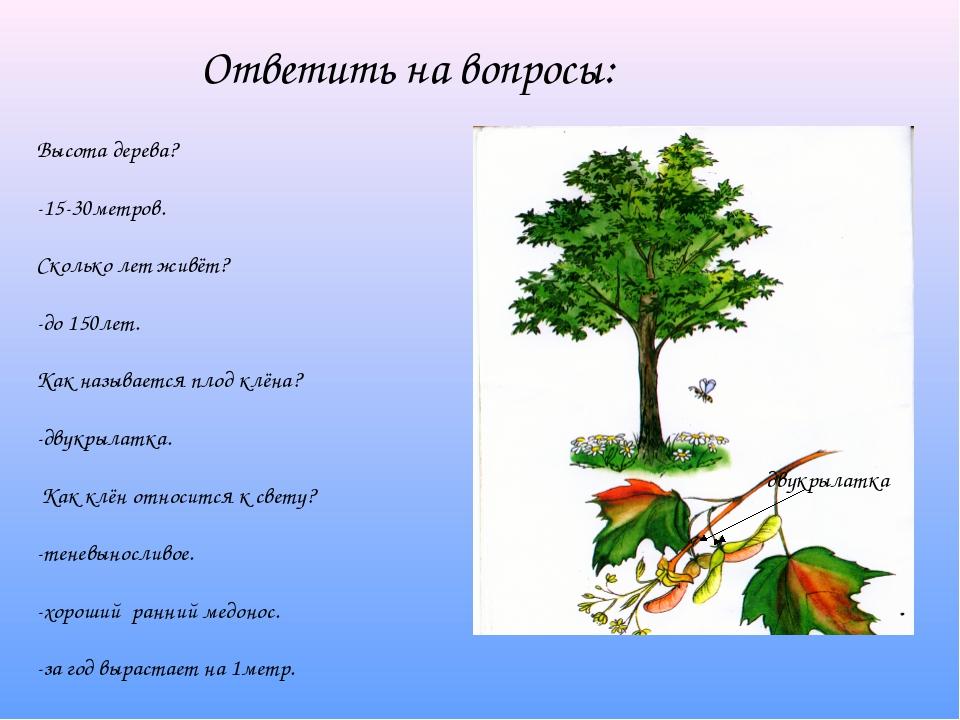 Ответить на вопросы: Высота дерева? -15-30метров. Сколько лет живёт? -до 150л...