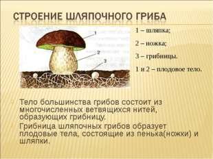 Тело большинства грибов состоит из многочисленных ветвящихся нитей, образующи
