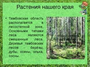 Растения нашего края Тамбовская область располагается в лесостепной зоне. Осн
