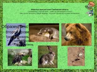 Животные Красной книги Тамбовской области Сизоворонка, степной орёл – редко