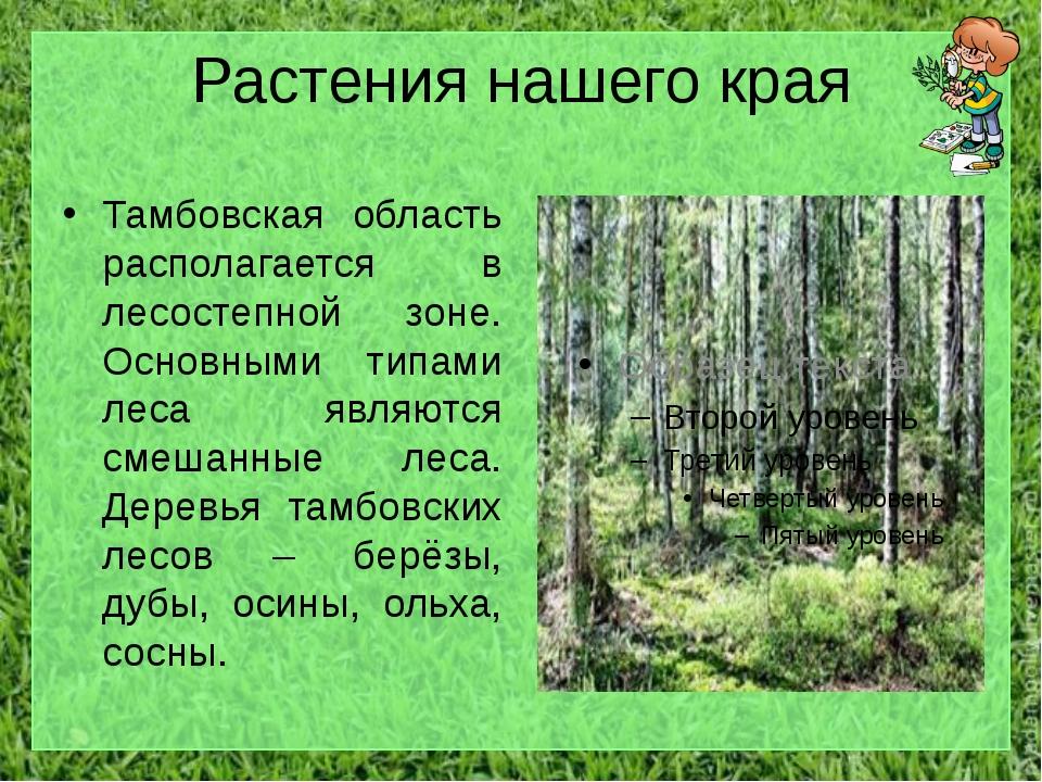 Растения нашего края Тамбовская область располагается в лесостепной зоне. Осн...