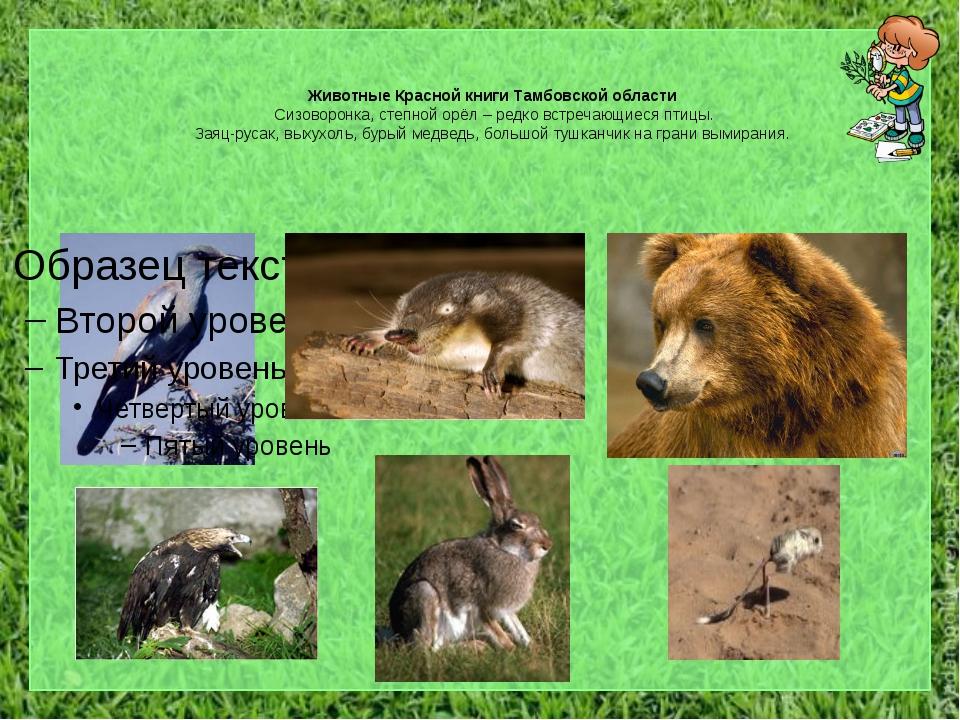 Животные Красной книги Тамбовской области Сизоворонка, степной орёл – редко...