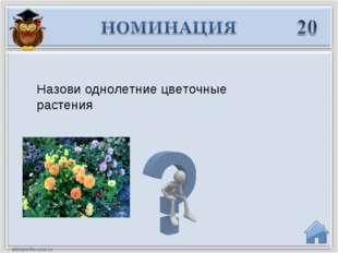 Назови однолетние цветочные растения