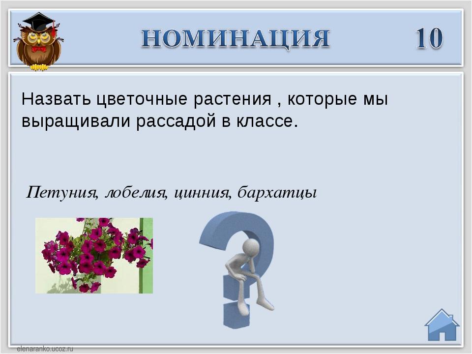 Петуния, лобелия, цинния, бархатцы Назвать цветочные растения , которые мы в...
