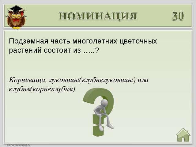 Корневища, луковицы(клубнелуковицы) или клубня(корнеклубня) Подземная часть м...