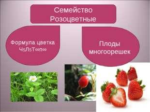 Семейство Розоцветные Формула цветка Ч5Л5Т∞п∞ Плоды многоорешек