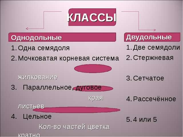 КЛАССЫ Однодольные Одна семядоля Мочковатая корневая система жилкование 3. Па...